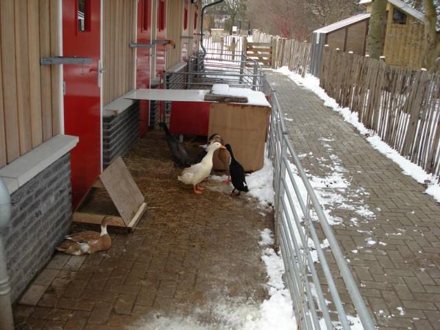 Kinderboerderij bij de Nieuwe Nes.