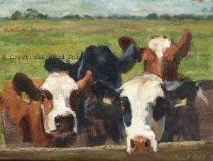 Kijk op koeien