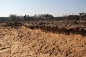 Steil zandwandje op de Westerheide