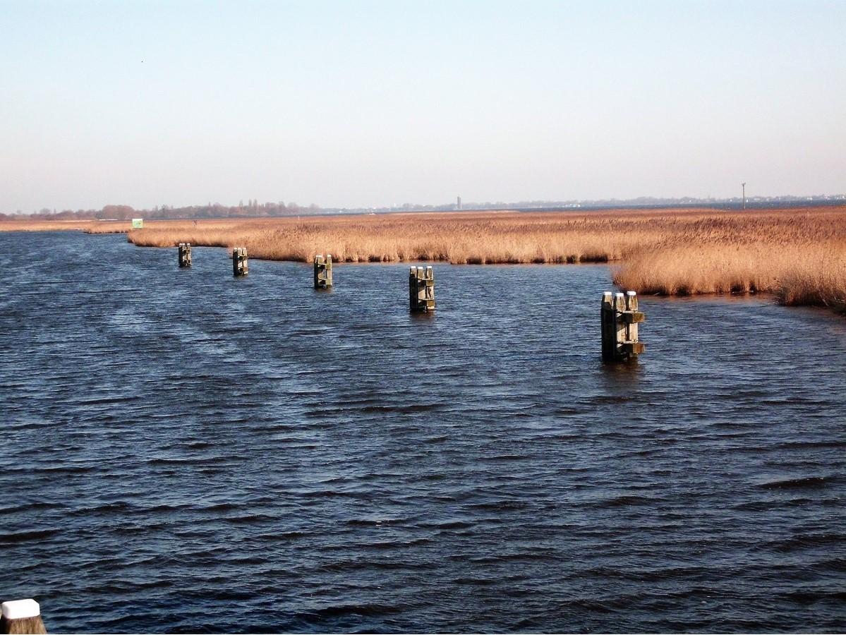 Een uitgestrekt rietveld in een hoek van de Westeinderplas. Hier schuilt de meerval, een vis met een lengte van wel twee meter. Heel in de verte, in het midden van de foto, schemert de watertoren van Aalsmeer.