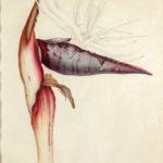 Teylers toont betoverend mooie aquarellen