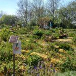 Met een gids door de Hortus Alkmaar