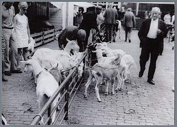 Geitenmarkt in Purmerend, circa 1965.