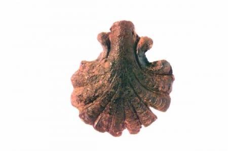 Pelgrimsinsigne in de vorm van een jacobsschelp, 14e eeuw.