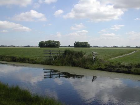 Landschap Ronde Hoep met bosjes