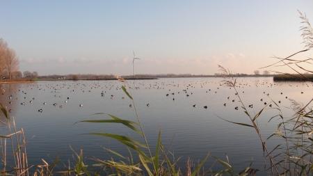 Watervogels op de Ouderkerkerplas.