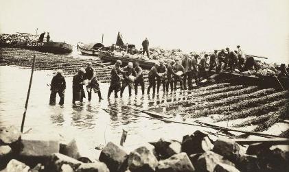 Een grote mat van wilgentenen wordt langzaam gezonken door haar te verzwaren met stenen, 20 mei 1931.