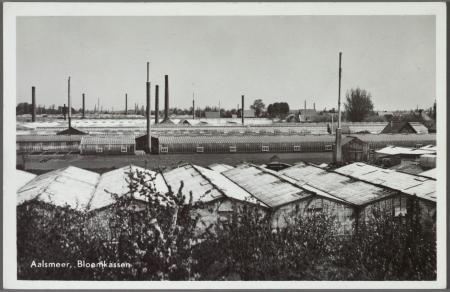 Bloemkassen in Aalsmeer.