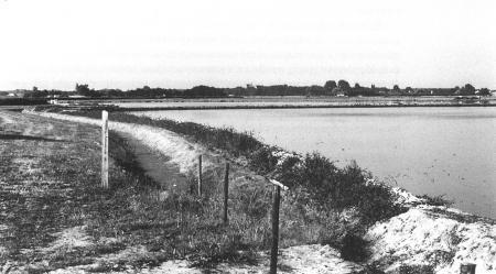 Blank gezet bollenland in de Sammerspolder ten westen van Heiloo, augustus 2009.