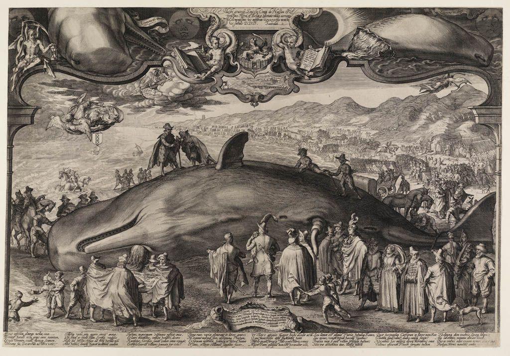 Potvisstranding, 1602