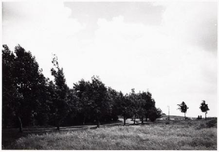 Kuieren in de polder