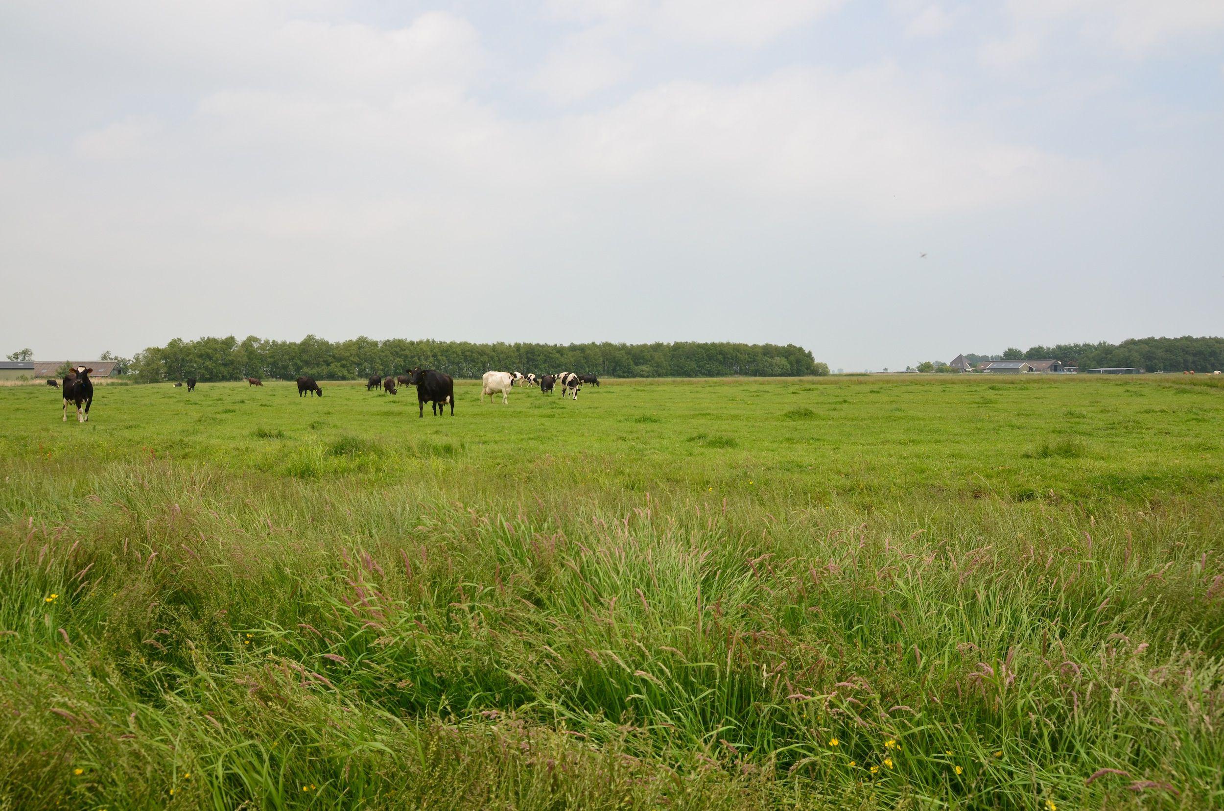 Niet-bemaaid grasland bij Overleek.