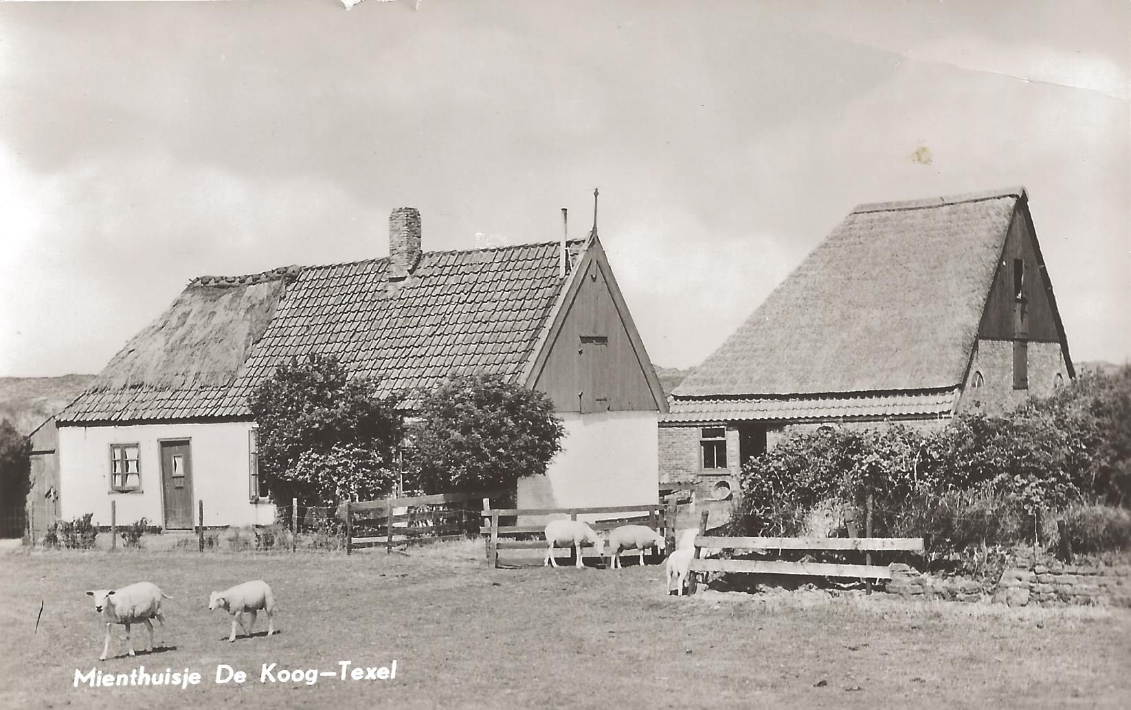 Collectie: Wilma Eelman, Texel