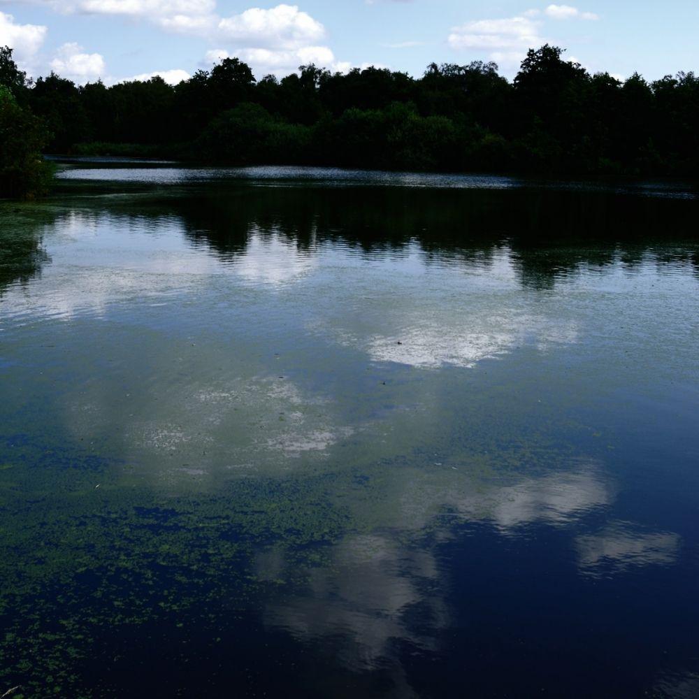 Dromen aan het meer