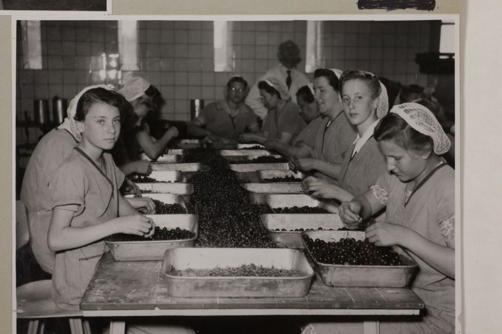 Kersen pitten, 1952.