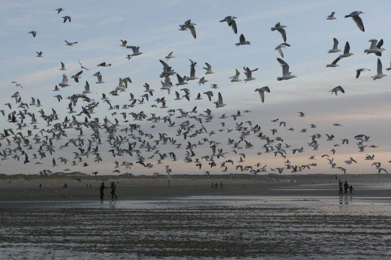 Kennemerstrand IJmuiden aan Zee