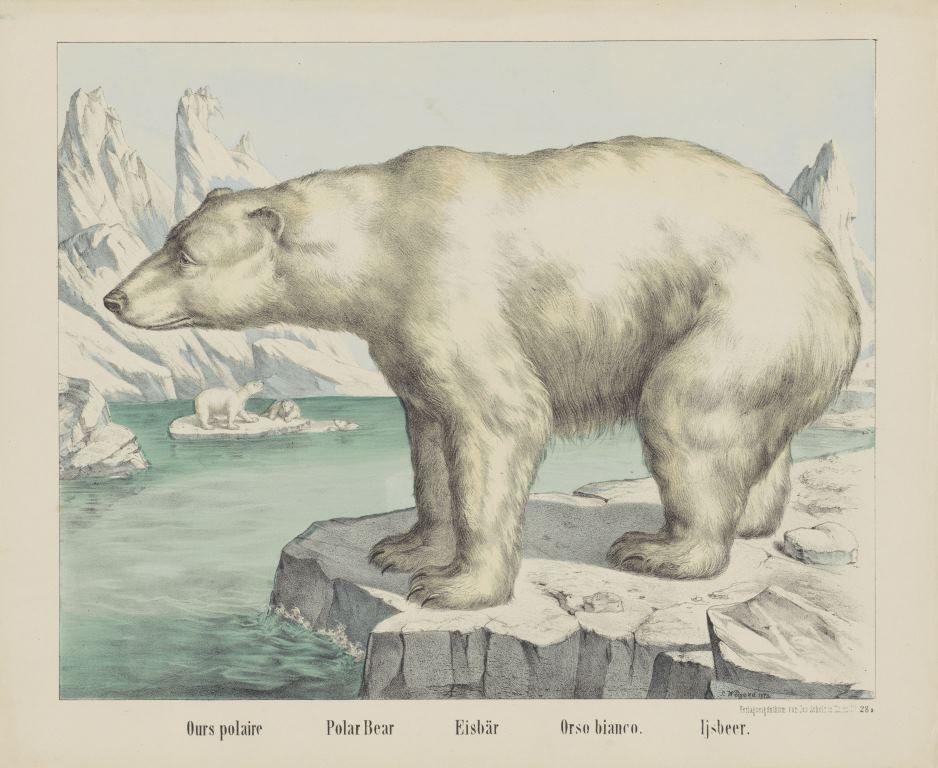 Ijsbeer, firma Jos. Scholz, anoniem, 1829 - 1880
