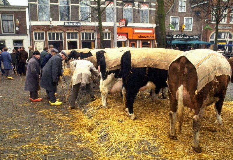 De eerste veemarkt na een mond- en klauwzeeruitbraak in 1984.