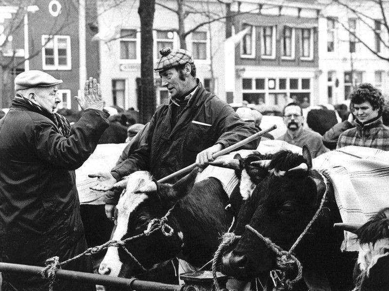 Handjeklap tijdens de onderhandelingen over vee op de markt in Purmerend, 1984.