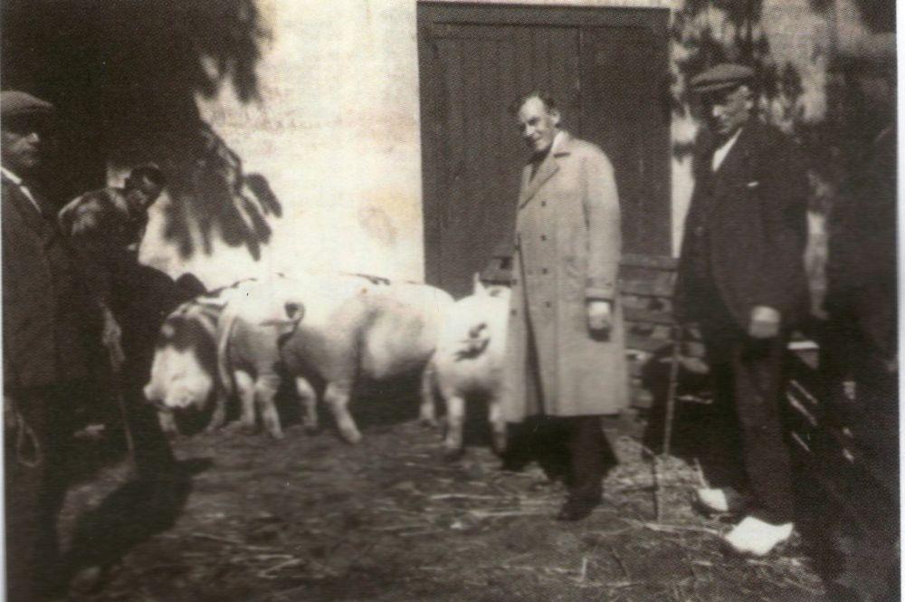 De levende have op de binnenplaats, 1931