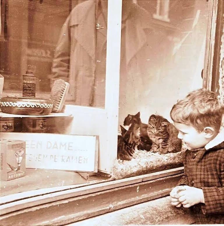 Keizerstraat, etalage dierenhandel Van de Wint.