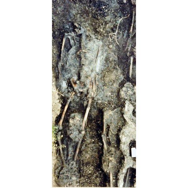 Enkele skeletten zoals die op het kerkhof van Geddingmore zijn aangetroffen.