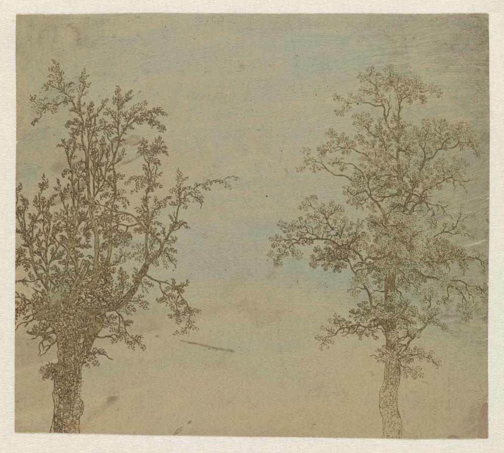 De twee bomen, een els en een es
