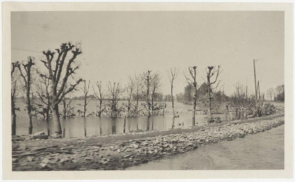 Kale bomen door het zoute water na de watersnoodramp in Buiksloot, 1916