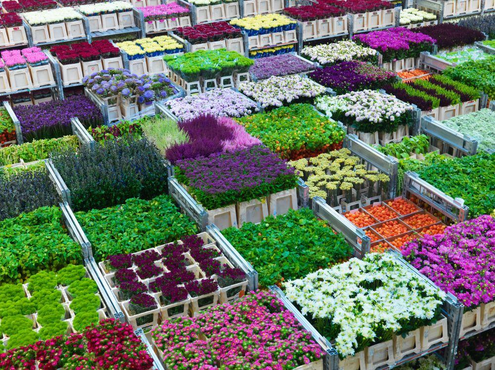 Bloemen bij FloraHolland Aalsmeer
