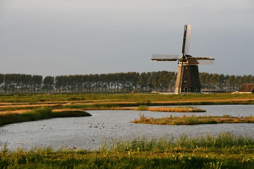 De Wogmeerpolder.
